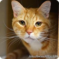 Adopt A Pet :: Tiberius - East Hartford, CT