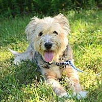 Adopt A Pet :: Misty - Siler City, NC