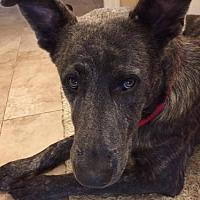 Adopt A Pet :: Madison - 17 Adoption Pending - Lithia, FL
