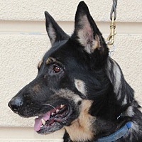 Adopt A Pet :: Lara A. - Sacramento, CA
