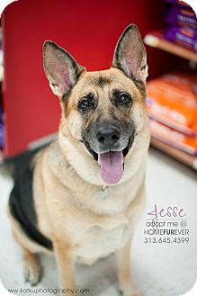 German Shepherd Dog Dog for adoption in Detroit, Michigan - Jesse-Adopted!