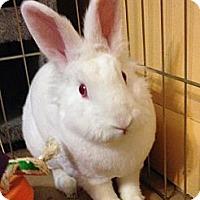 Adopt A Pet :: JJ - Huntsville, AL