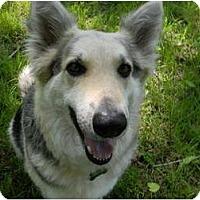 Adopt A Pet :: Boosty - Arlington, TX
