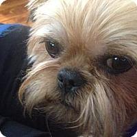 Adopt A Pet :: CODY - ADOPTION PENDING - Jackson, MS