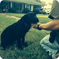 Adopt A Pet :: ANNA - Glastonbury, CT
