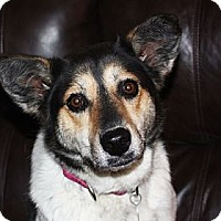 Adopt A Pet :: Macy - in Maine - kennebunkport, ME