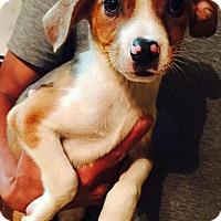 Adopt A Pet :: Ben - Ocala, FL