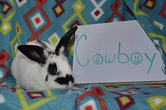American for adoption in Erie, Pennsylvania - Cowboy