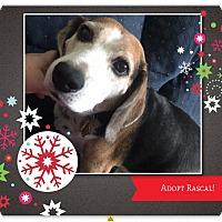 Adopt A Pet :: RASCAL - Ventnor City, NJ