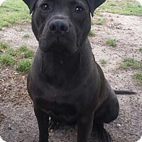 Adopt A Pet :: Georgia - Snow Hill, NC