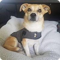 Adopt A Pet :: TY - Santa Clarita, CA