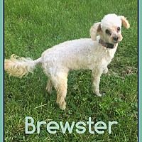 Adopt A Pet :: Brewster - Fort Wayne, IN