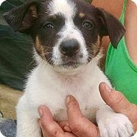 Adopt A Pet :: Tia - Quinlan, TX