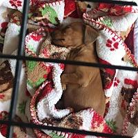 Adopt A Pet :: Jenna - Humble, TX