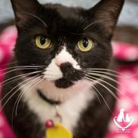 Adopt A Pet :: Amberly - Mt Pleasant, MI