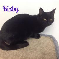 Adopt A Pet :: Bixby - Crossfield, AB