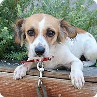 Adopt A Pet :: Teesha - Los Angeles, CA