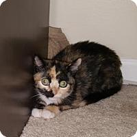 Adopt A Pet :: Goggles - Marlton, NJ