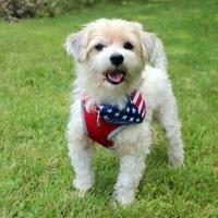 Adopt A Pet :: Marble - Special Needs - Elkhorn, WI