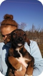 Husky/Shepherd (Unknown Type) Mix Puppy for adoption in Marlton, New Jersey - Lil Man