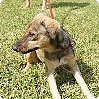 Adopt A Pet :: Skeeter - Pointblank, TX