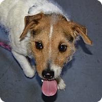 Adopt A Pet :: JR - Meridian, ID