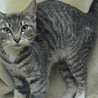 Adopt A Pet :: Alisha - Fort Walton Beach, FL