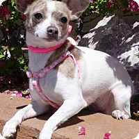 Adopt A Pet :: Phiggy - Gilbert, AZ