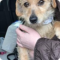 Adopt A Pet :: Hilda - Kirkland, WA
