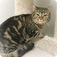 Adopt A Pet :: Shyla - Webster, MA