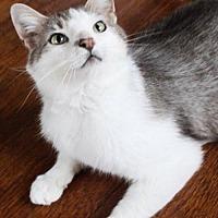 Adopt A Pet :: Theo - Morgantown, WV
