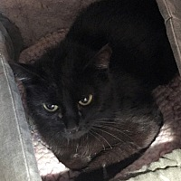 Adopt A Pet :: Ebony - Loogootee, IN