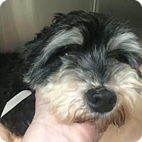 Adopt A Pet :: Mimosa - Oak Ridge, NJ