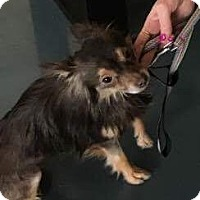 Terrier (Unknown Type, Medium) Mix Dog for adoption in Chico, California - Beyonce