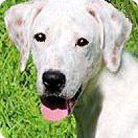 Adopt A Pet :: TIPPY(SOOO SMART!!) - Wakefield, RI