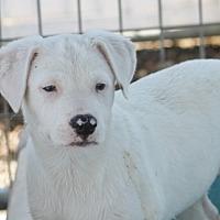 Adopt A Pet :: Tara Knowles Teller - Hooksett, NH