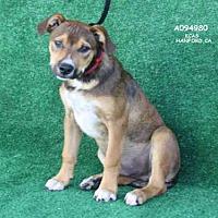 Adopt A Pet :: A094980 - Hanford, CA
