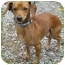 Photo 1 - Chihuahua Mix Dog for adoption in Harrisonburg, Virginia - Jerry