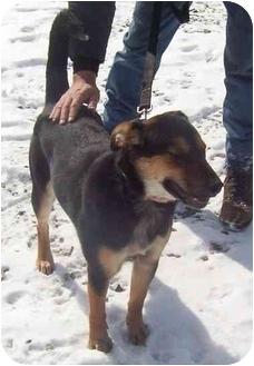 Shepherd (Unknown Type) Mix Puppy for adoption in Somerset, Pennsylvania - Roberta