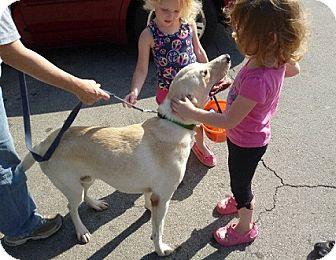 Labrador Retriever Mix Dog for adoption in Birmingham, Alabama - Cooper