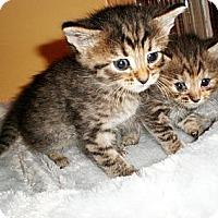 Adopt A Pet :: Dallas - Xenia, OH