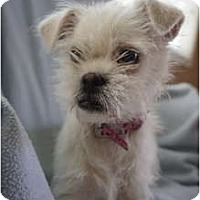 Adopt A Pet :: Yazoo - Toluca Lake, CA