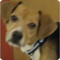 Adopt A Pet :: Patrick - Beachwood, OH