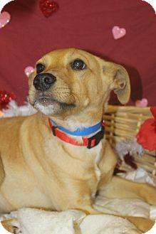 Labrador Retriever Mix Dog for adoption in Waldorf, Maryland - Bobby