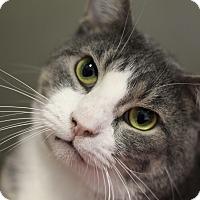 Adopt A Pet :: Pip Pop - Chicago, IL