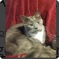 Adopt A Pet :: Layla - Edmonton, AB