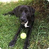 Adopt A Pet :: Max - Tumwater, WA