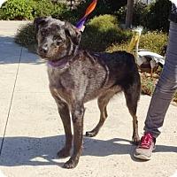 Adopt A Pet :: Magnum - Lathrop, CA