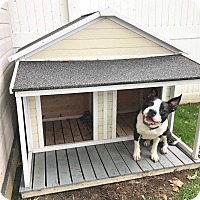 Adopt A Pet :: Olivia - Huntington, NY