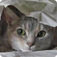 Adopt A Pet :: Michie - Lansdowne, PA
